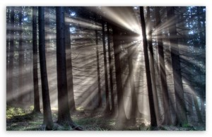 morning_sun_rays_forest-t2-300x194.jpg