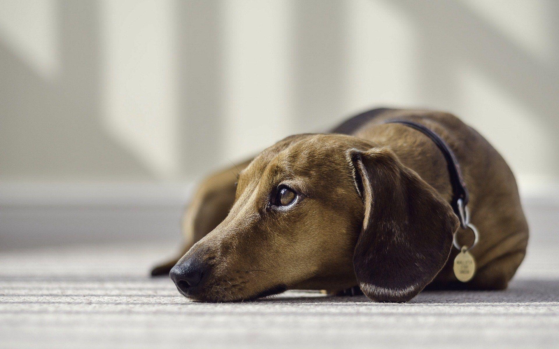 Dog on Carpet pic.jpg