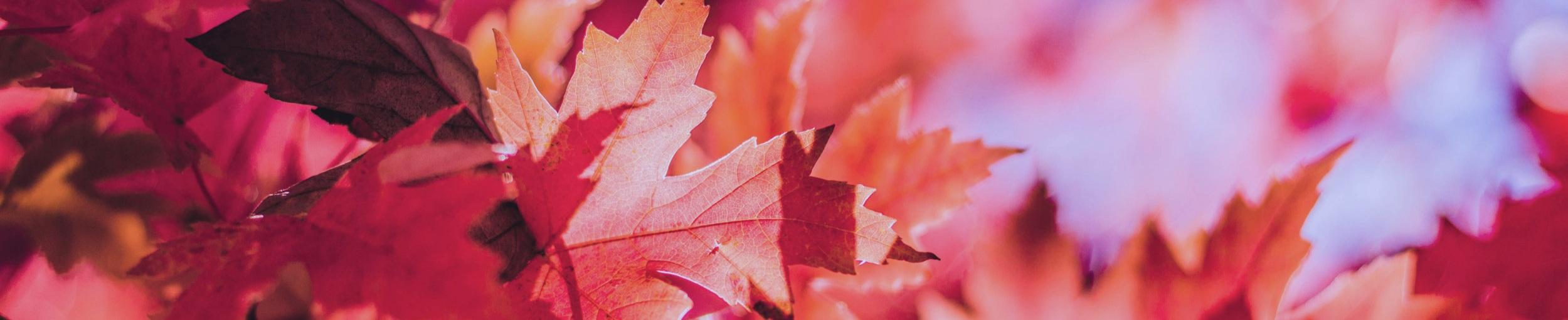 Red autumn -