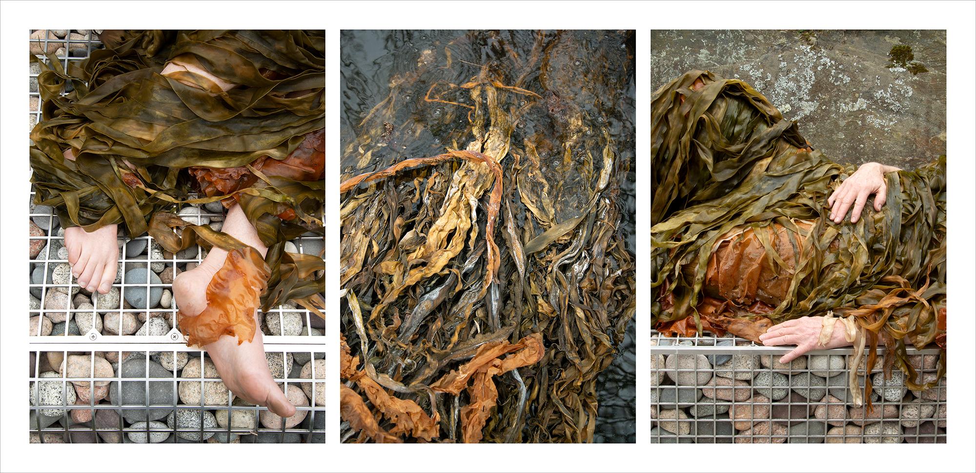 """Algae Visions Triptych,"" Celeste Roberge & Joy Drury Cox"