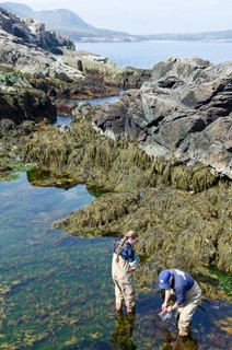 Tidepool Research Otter Cliffs.jpg