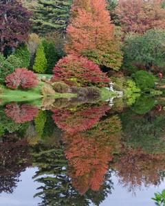 Autumn Asticou Azalea Gardens.jpg