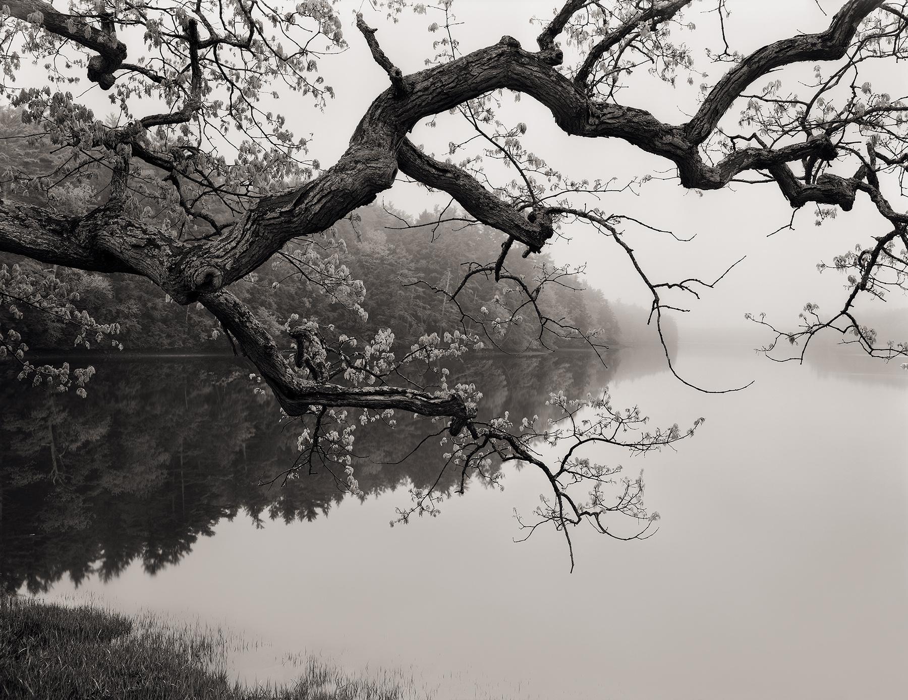 Salmon Fall s River #1