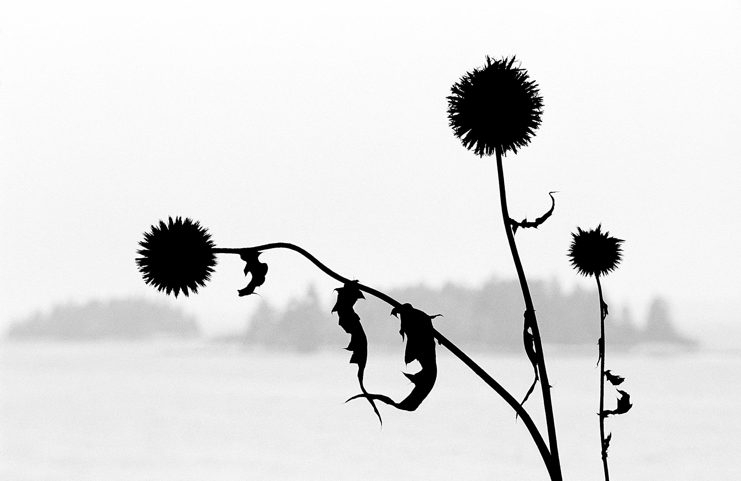 Thistle & Isles.jpg