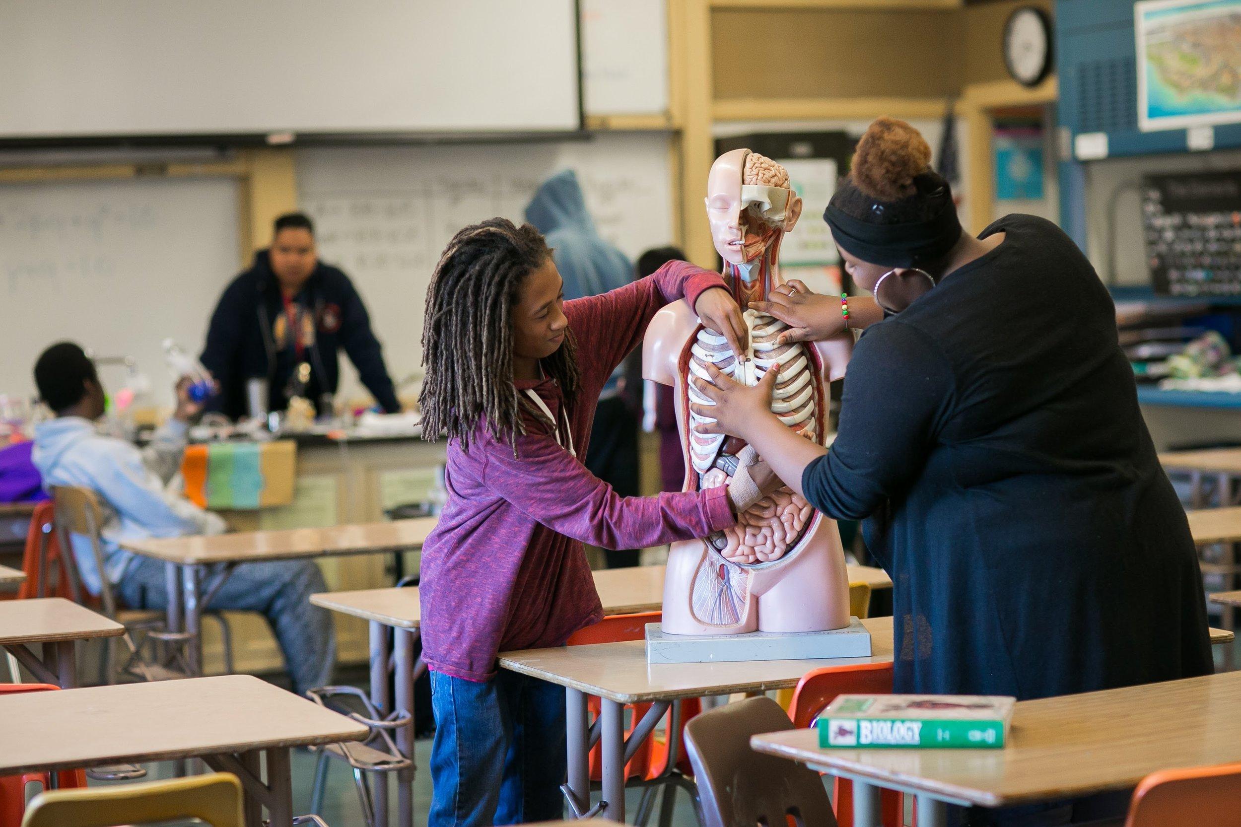 Students looking at human anatomy model