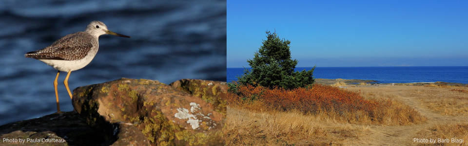 Grassy-Point-Duo.jpg