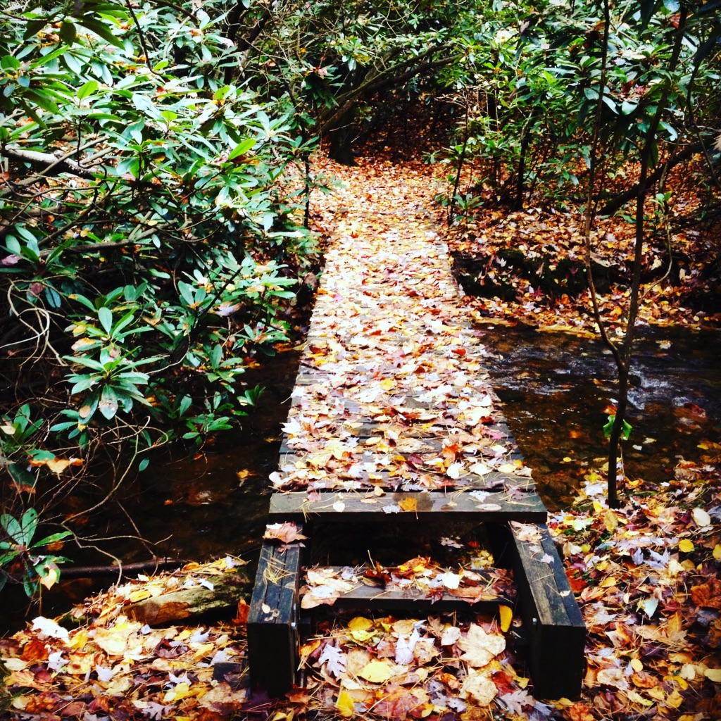 Footbridge in the rhododendron forests of Southwestern Virginia.