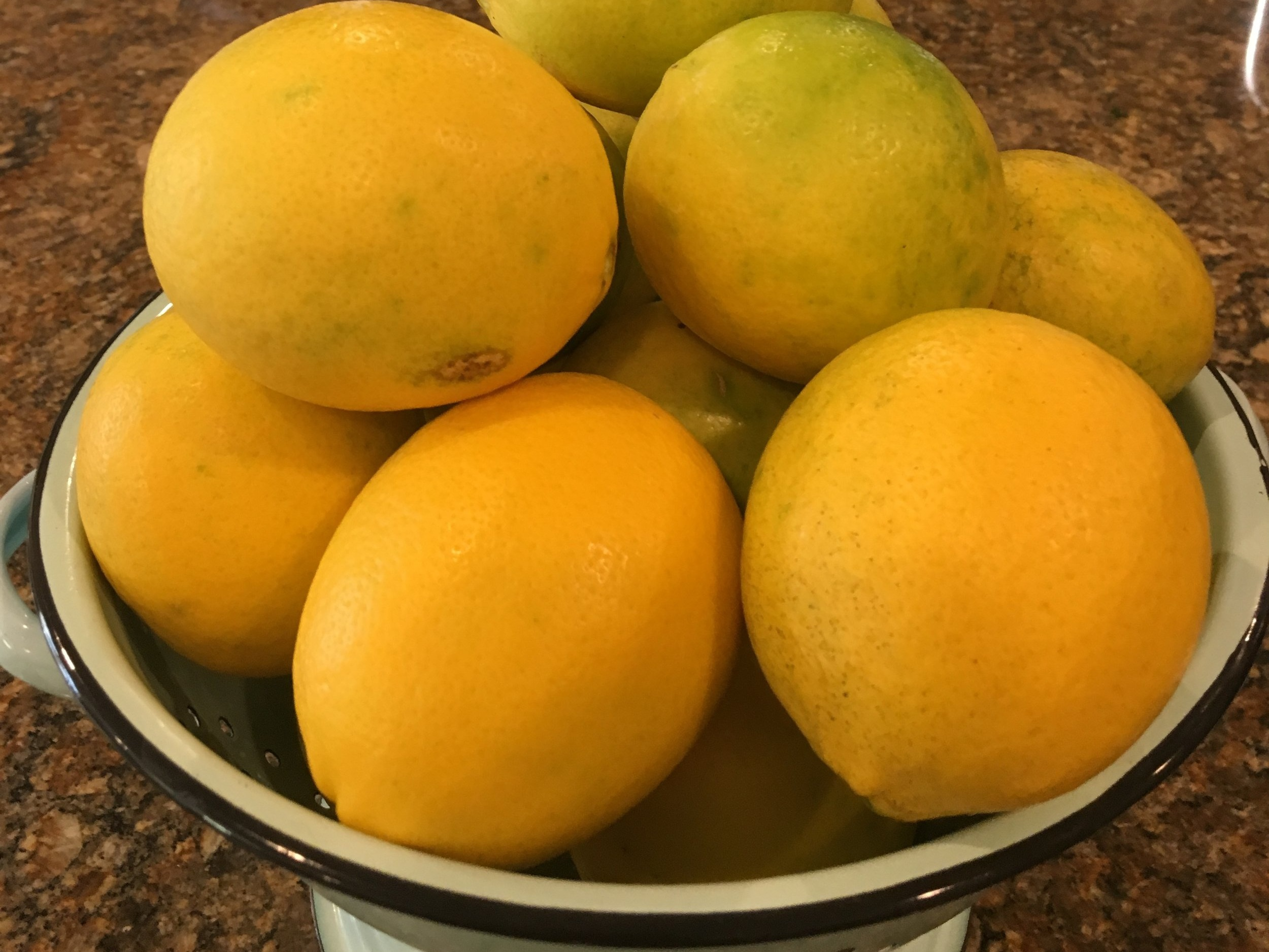 Last of the lemons - December 11, 2018 | FOODI have made it a practice for most of my life to stay out of the yard. I kept the house and cooked the meals, and my husband took care of the mowing, the planting, and the pruning. Old-fashioned, right? I just didn't like to get hot and sweaty. But in retirement, I have discovered that I love growing things. I don't even mind weeding!…