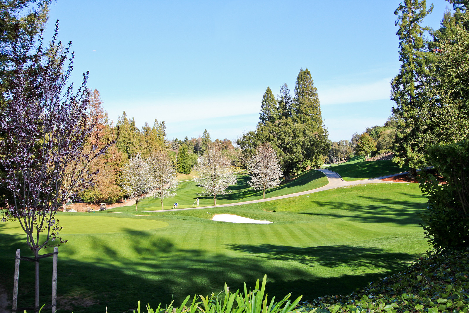 Sharon Park Golf.jpg