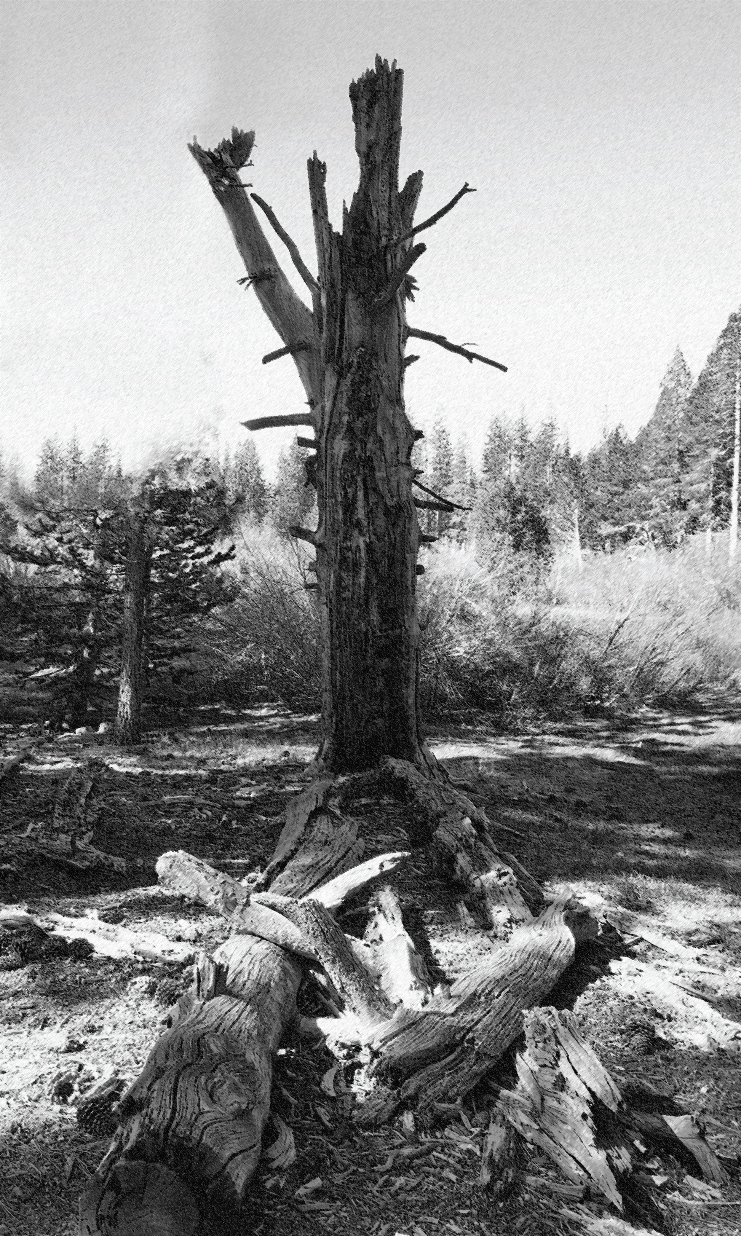 tree-object.jpg