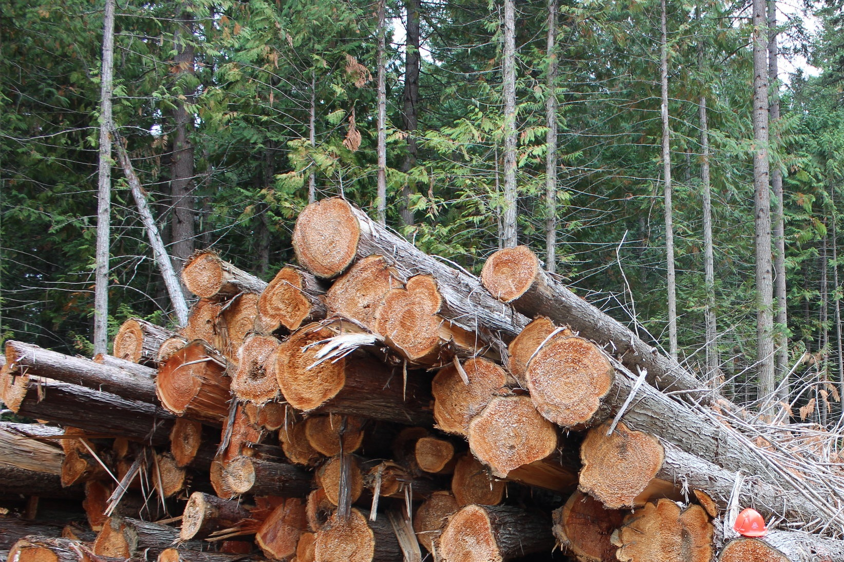 Log Purchases and Sales - Quality Logs for Quality Lumber