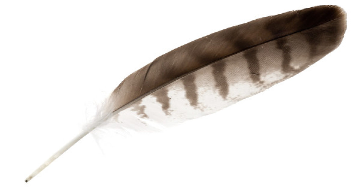 http---i.huffpost.com-gen-3926168-images-n-EAGLE-FEATHER-628x314.jpg
