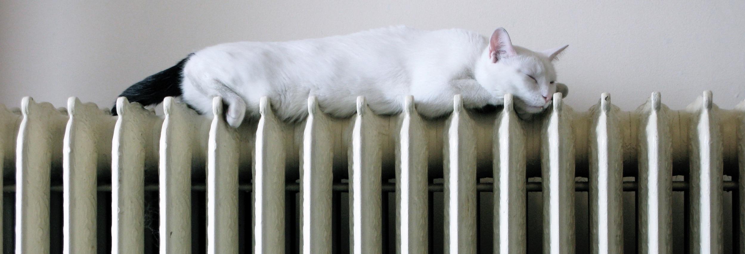 Radiator_with_cat_plumbing_heating_bracknell_power_flush.jpg