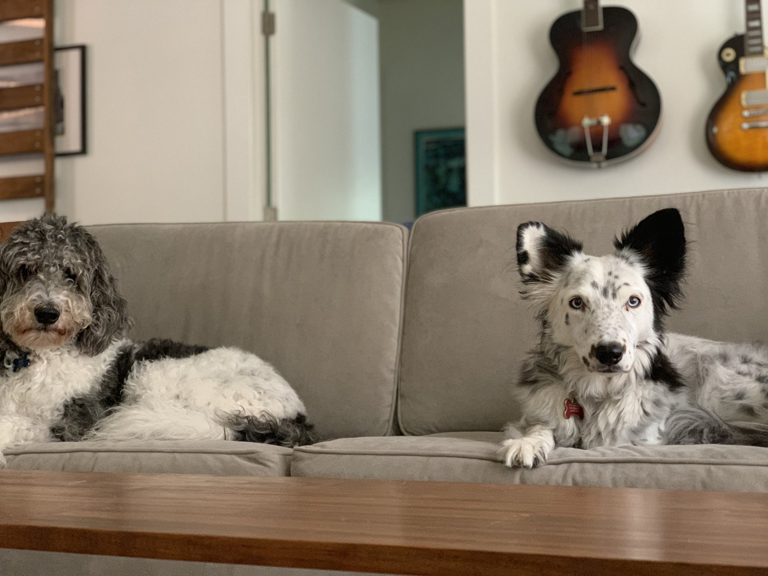 My office-mates, Edie and Indy. -