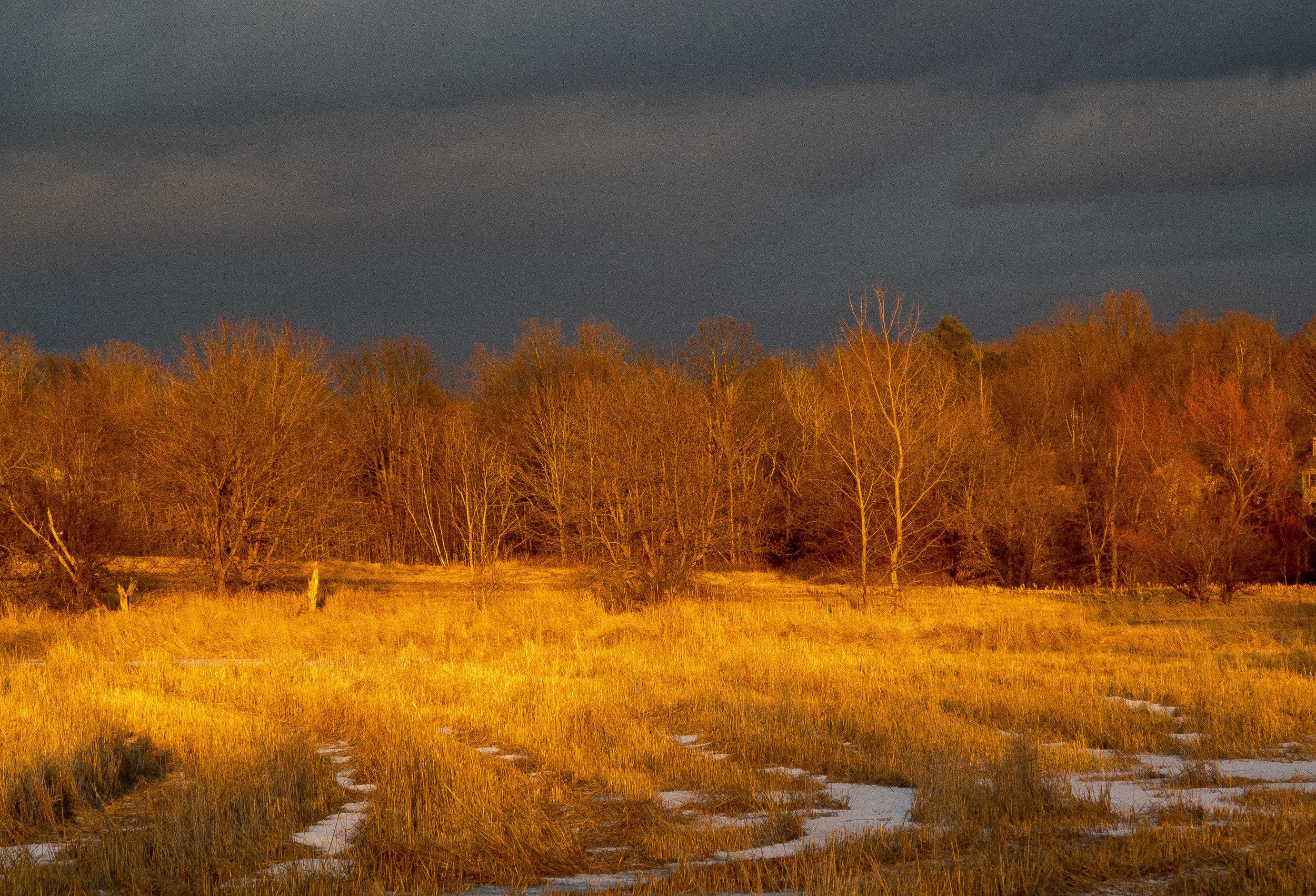 Field in Evening Glow.jpg