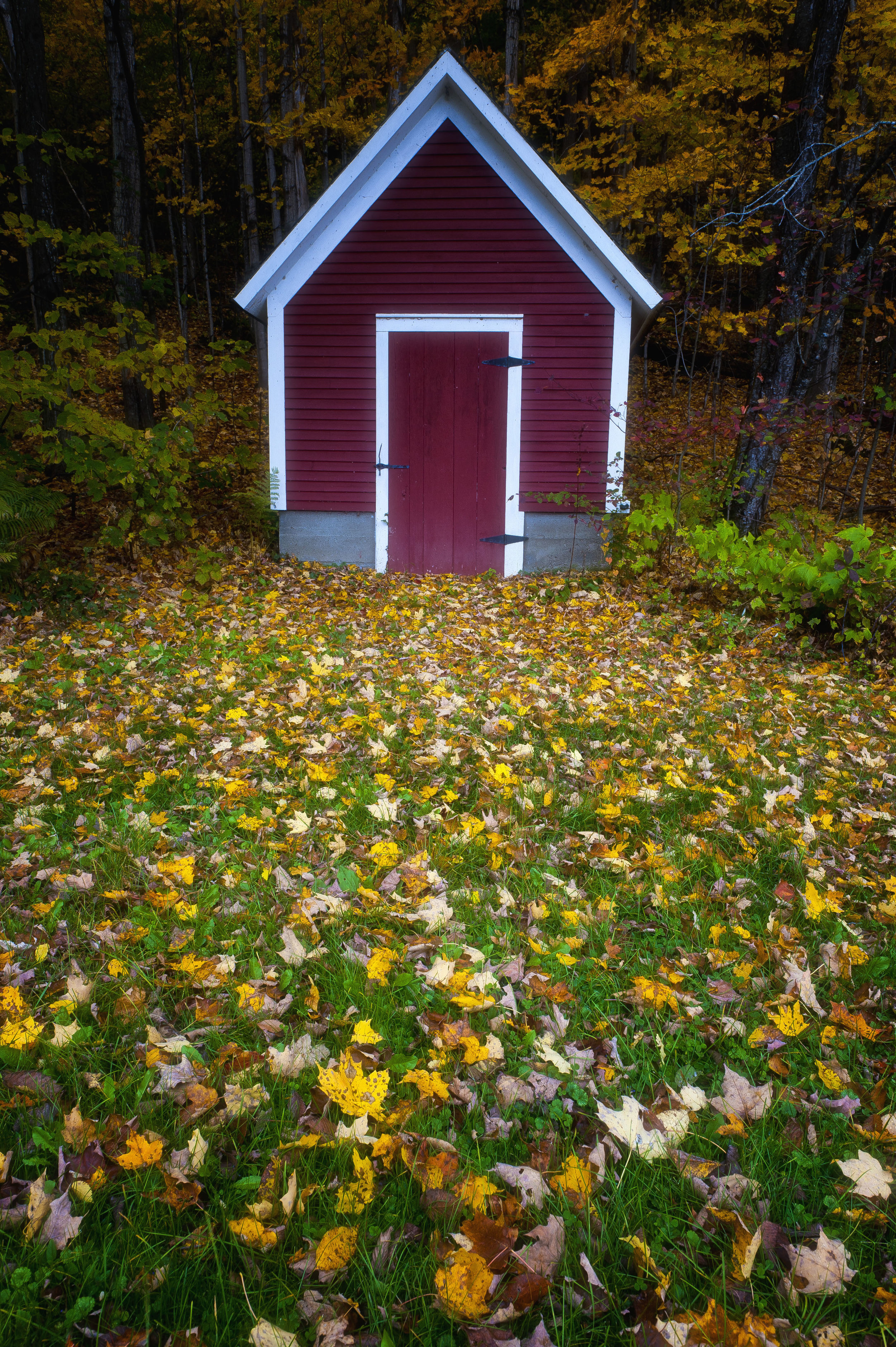 Little House with Fall Foliage.jpg