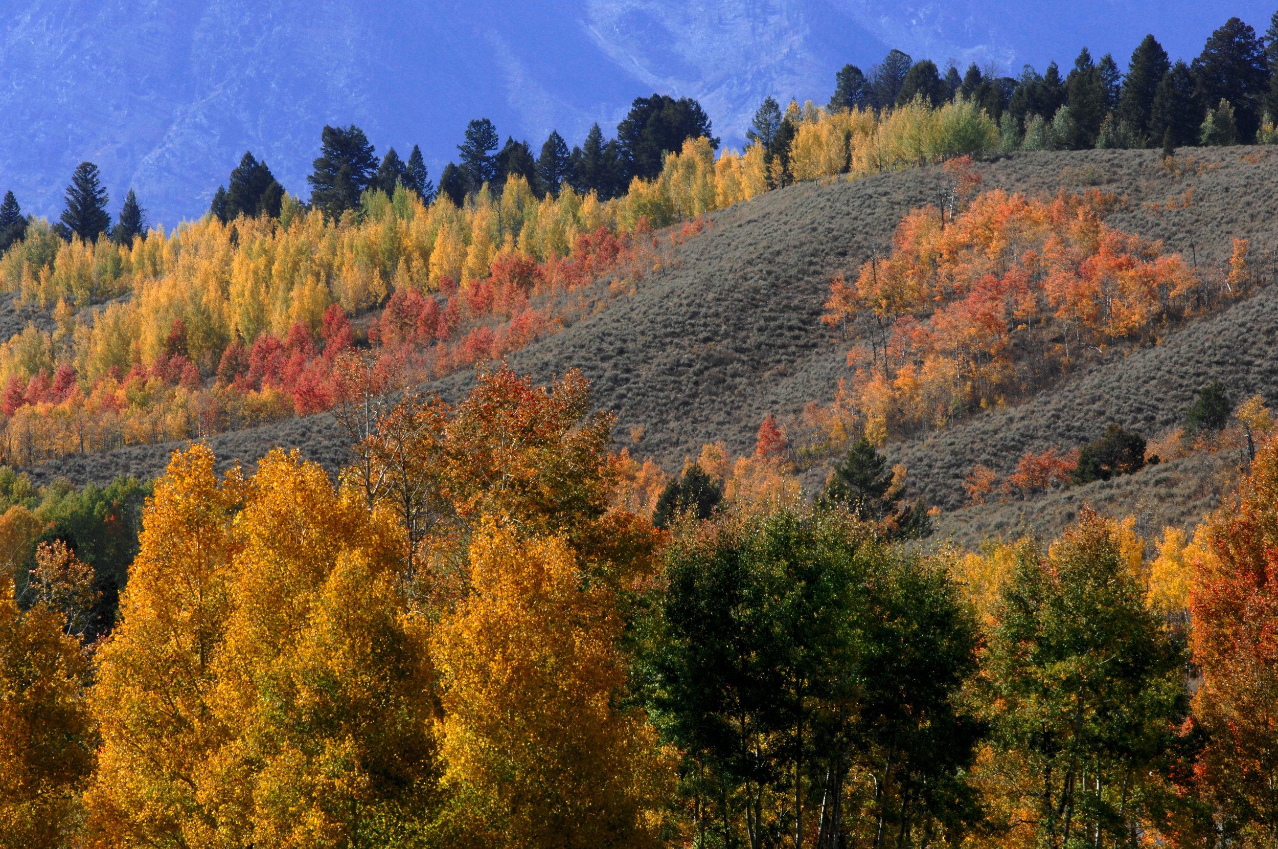 ShepardS_Fall Colors.jpg