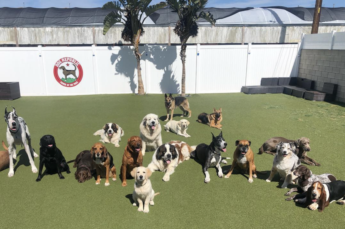 Cage-Free Boarding Resort - We let the dogs roam the yard at our supervised boarding and day-care facility so they can socialize and interact, but the best part is it mimics what their lives are like when they're at home.