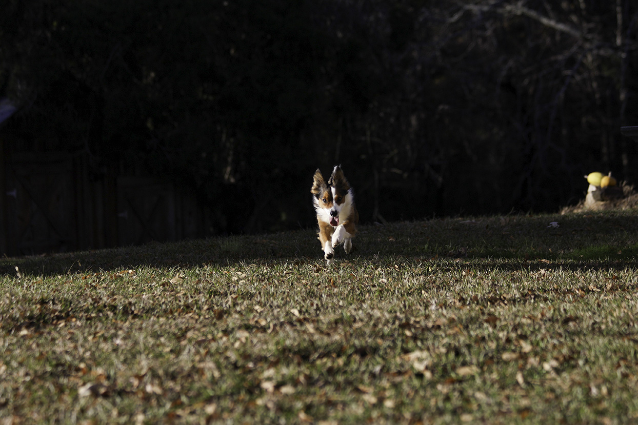 dog-running-couples-mini-session-family-documentary-photography-north-mississippi.jpg