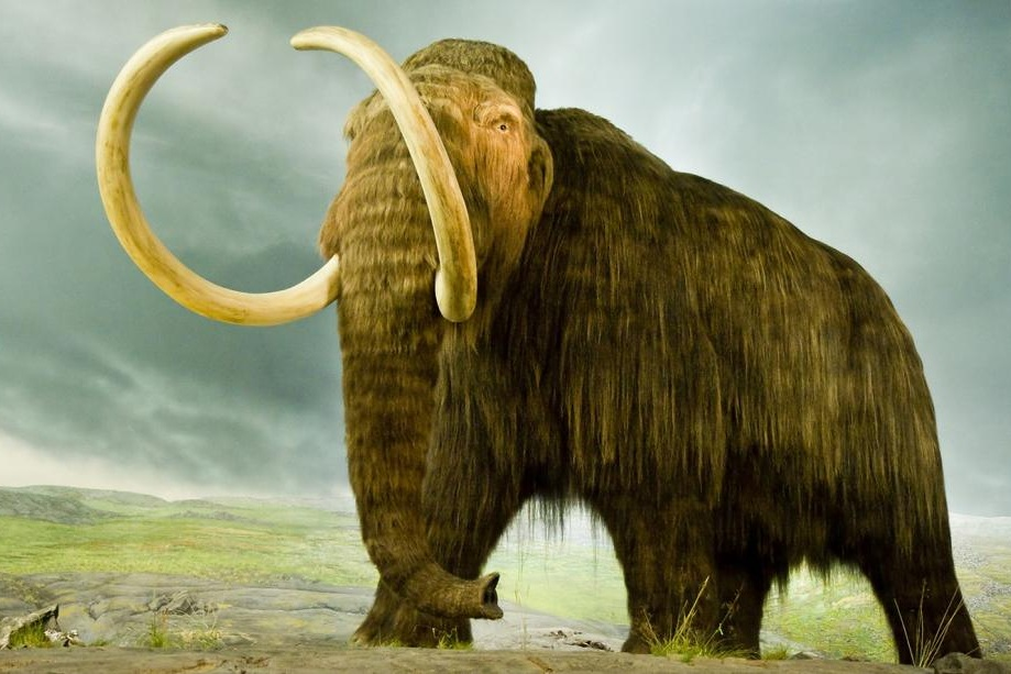 Thundering Woolly Mammoths - JULY 26/AUGUST 2 - JUNIOR