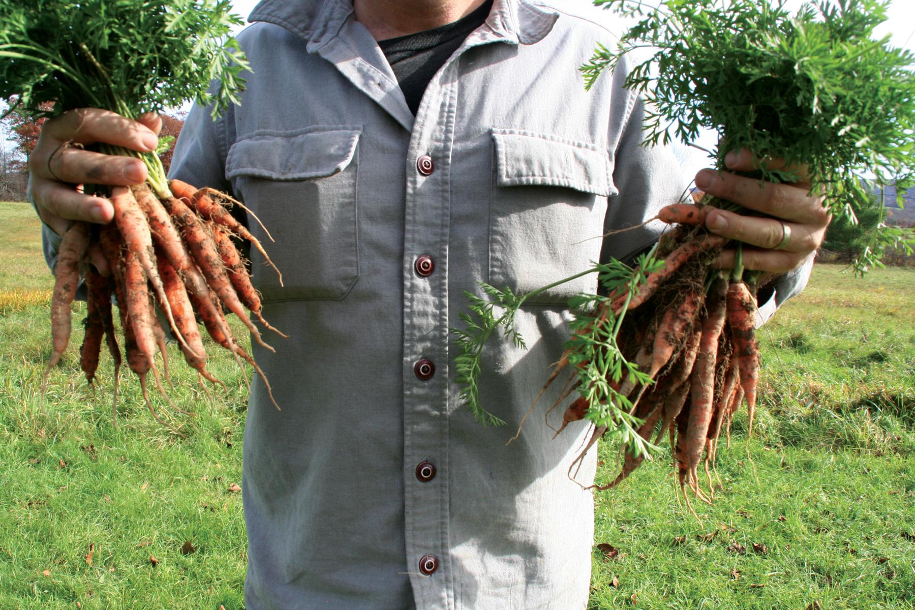 food_carrots_hands.JPG