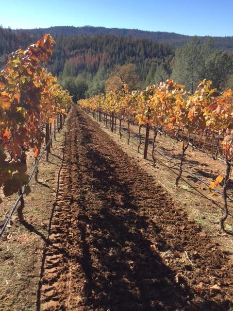 November_2015_YC_vineyard.34133559.jpg