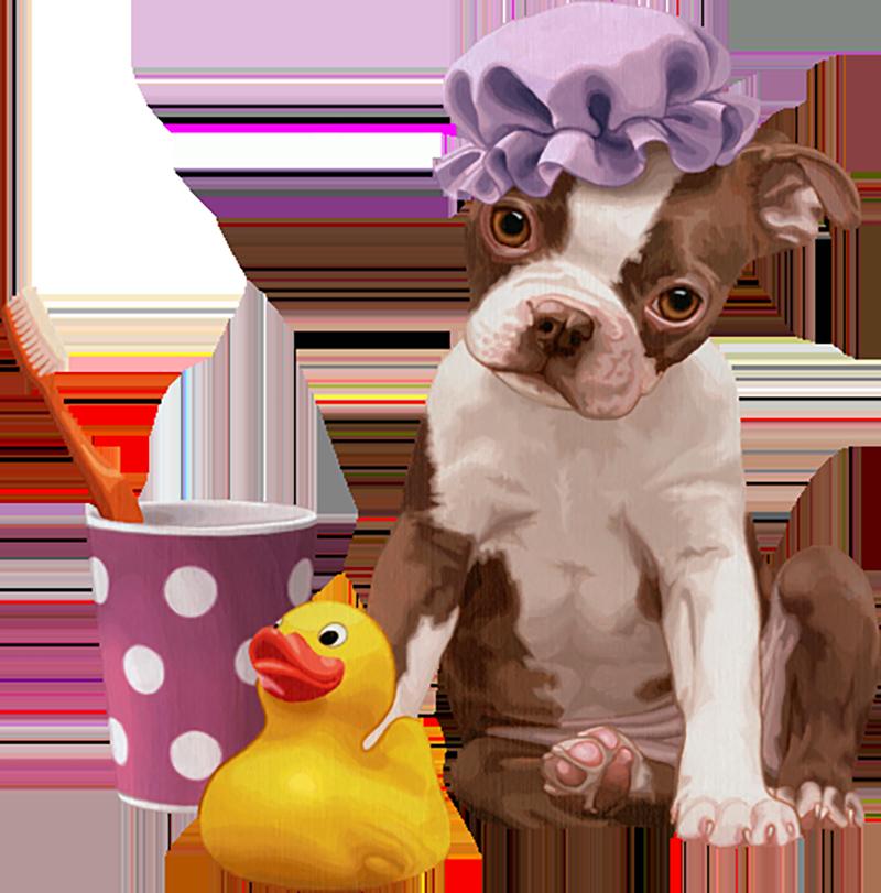 Certified Companion Animal Hygienist -