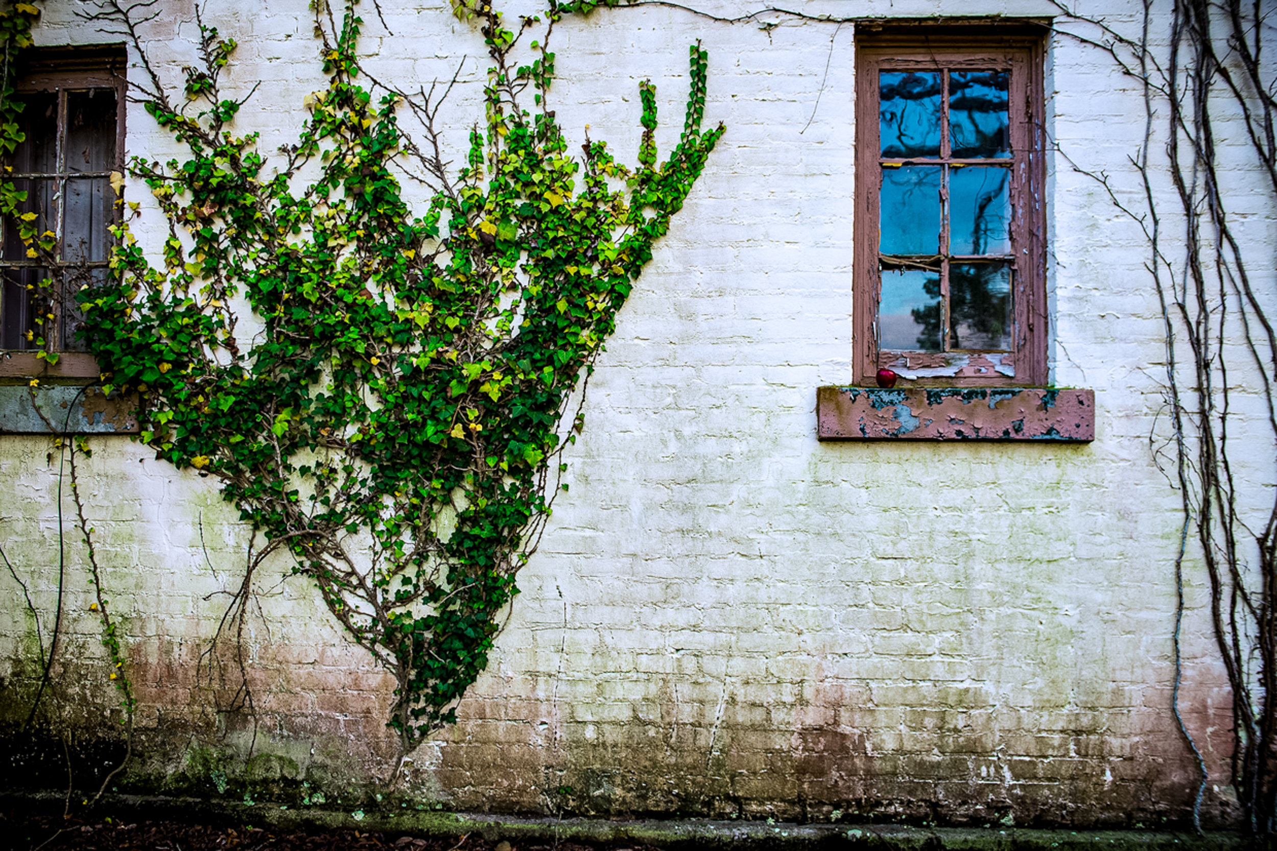 Vines cover the walls of crumbling buildings,  chipping the paint of old whites, now tainted.