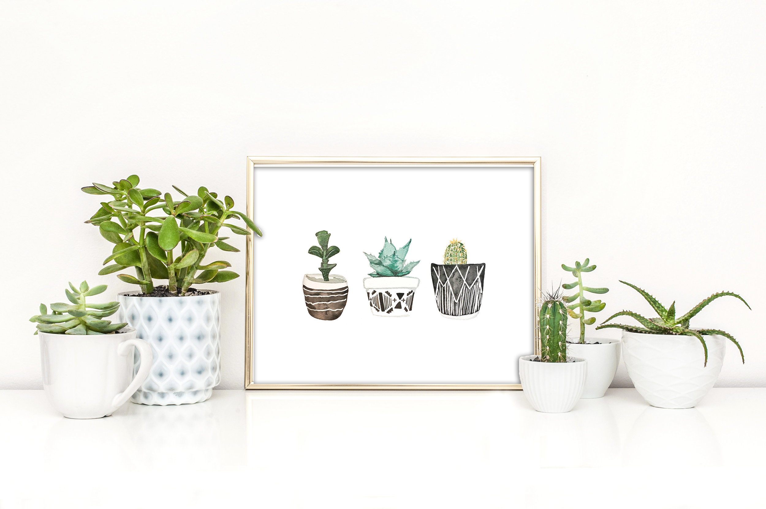 The Botanical Collection - Succulents, Cacti, Florals, and More