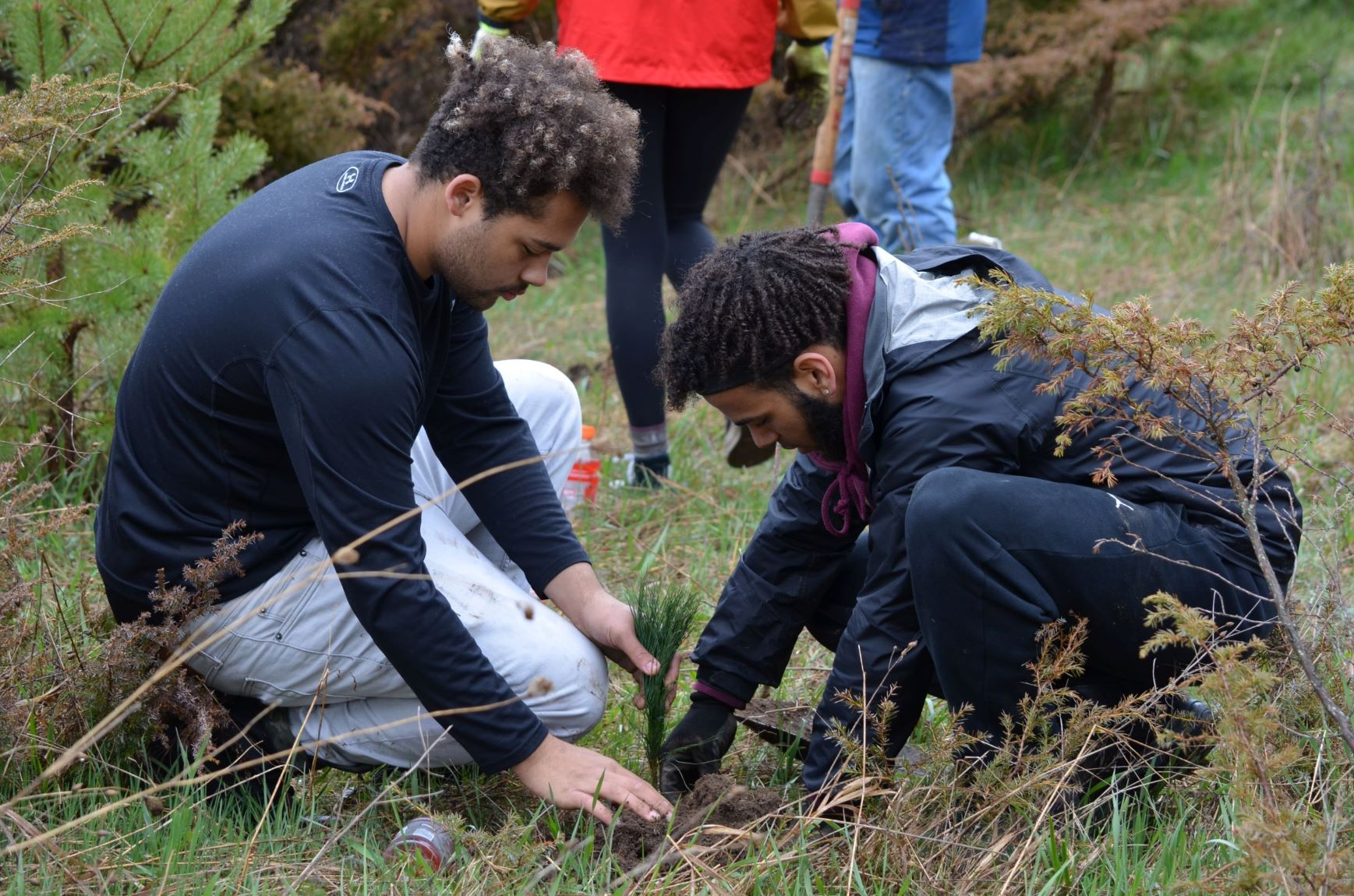 Sturgeon Bay High School students plant trees in Ellison Bay, WI on May 4, 2019.