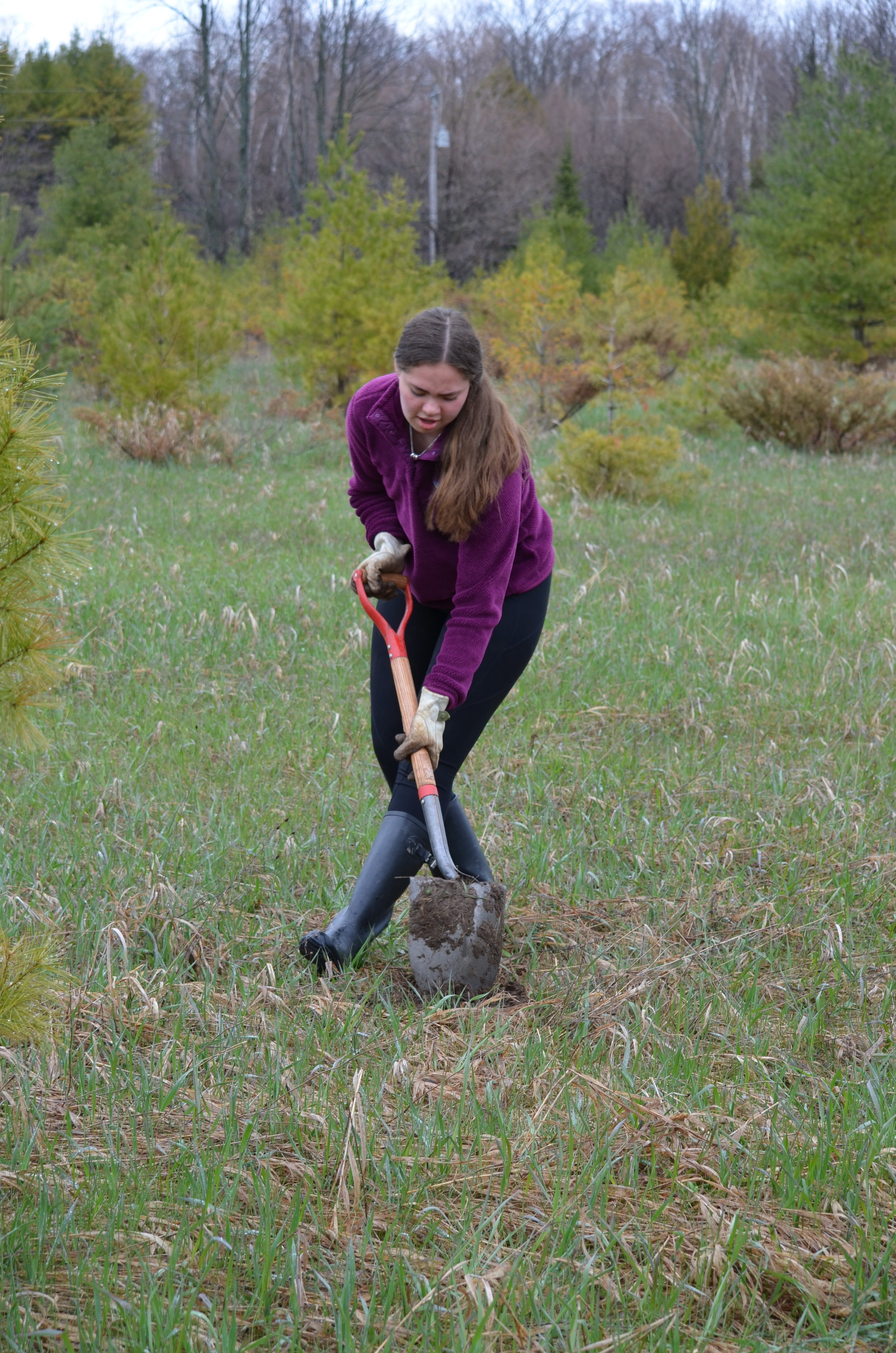 Sturgeon Bay High School student plants trees with classmates on May 6, 2019 on The Nature Conservancy property in Ellison Bay, WI.