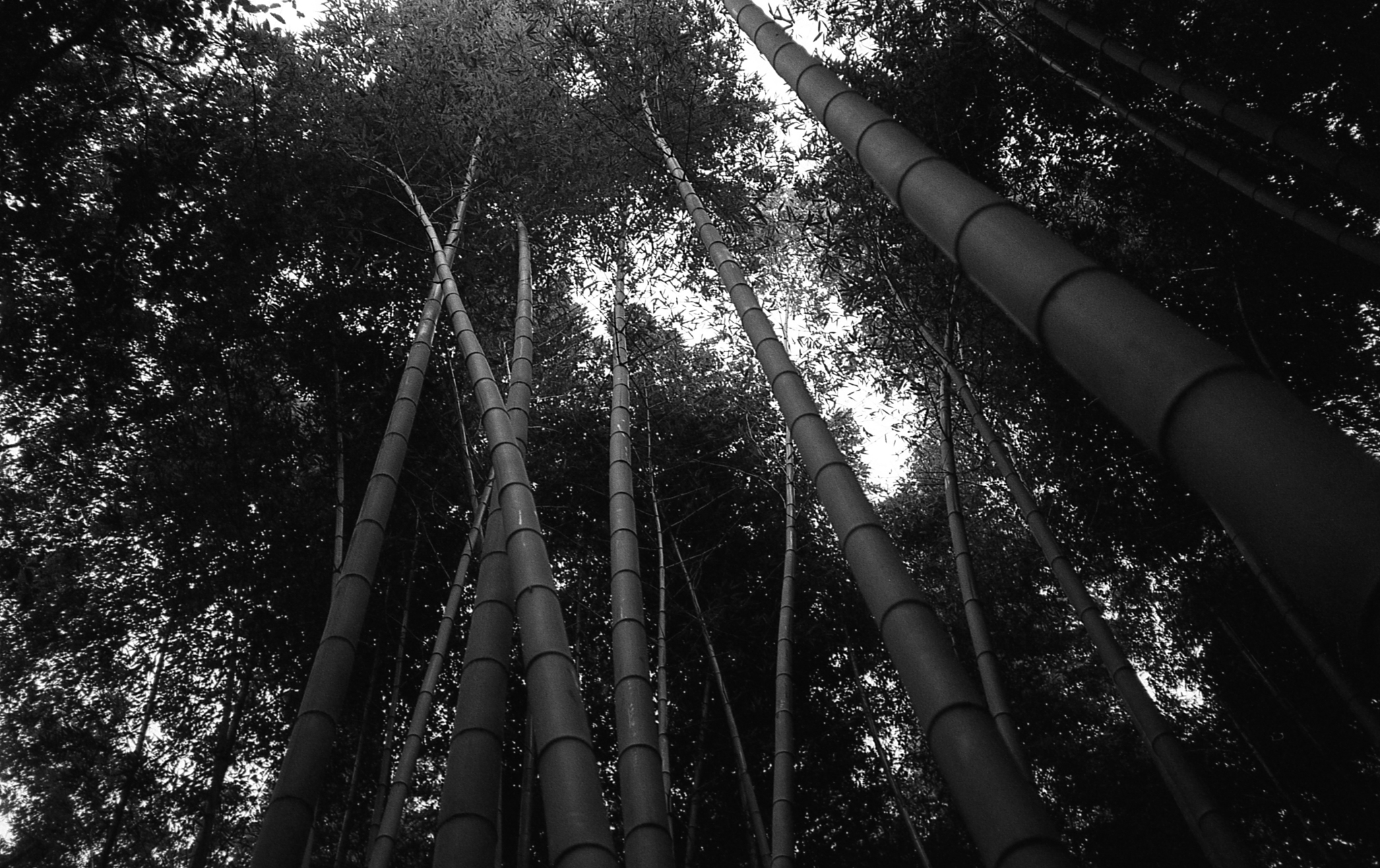 Arashiyama Bamboo Forest (Kyoto)