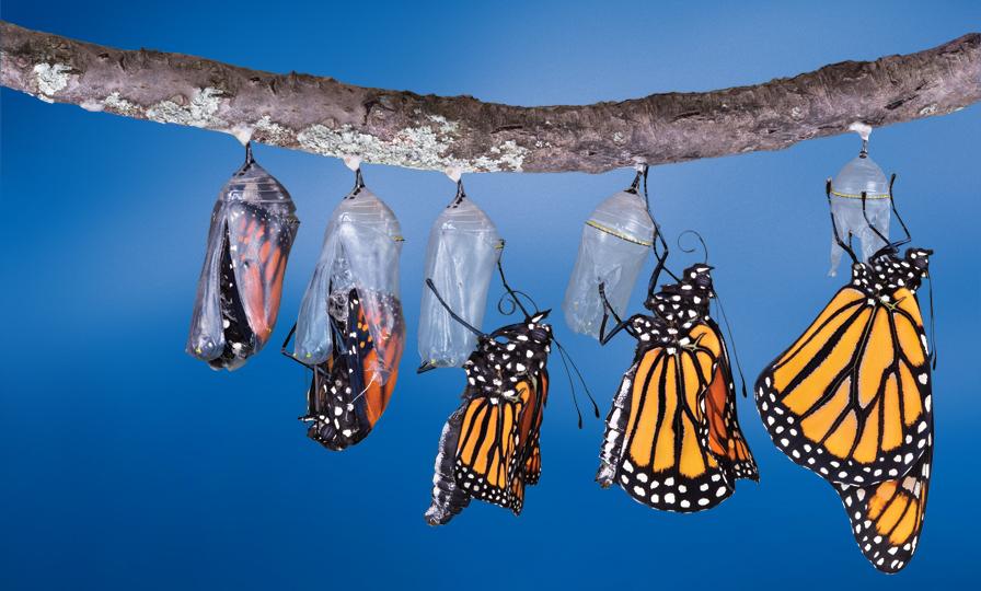Principles of Transformation -