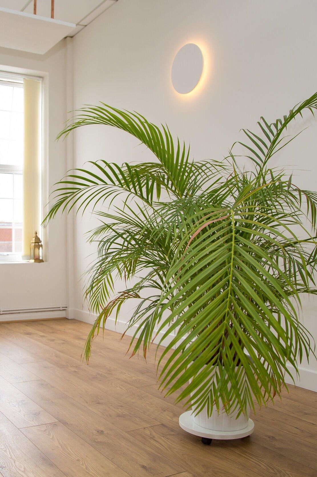 Tropical plants thrive in Sun studio