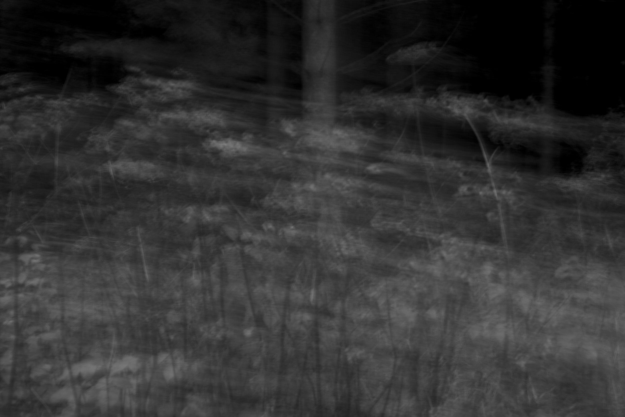 Forest bw 2019-1.jpg