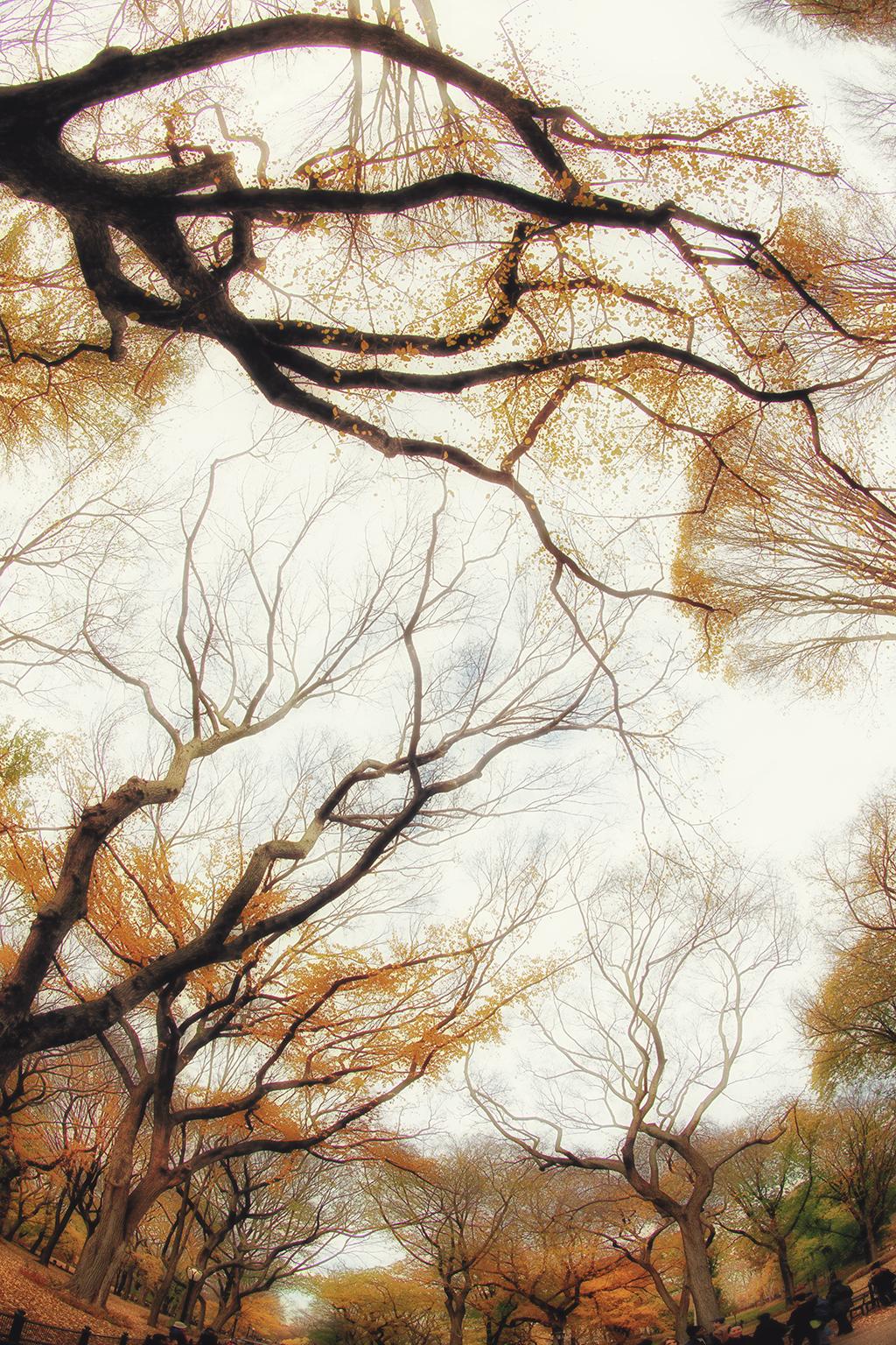 CENTRAL PARK TREES E