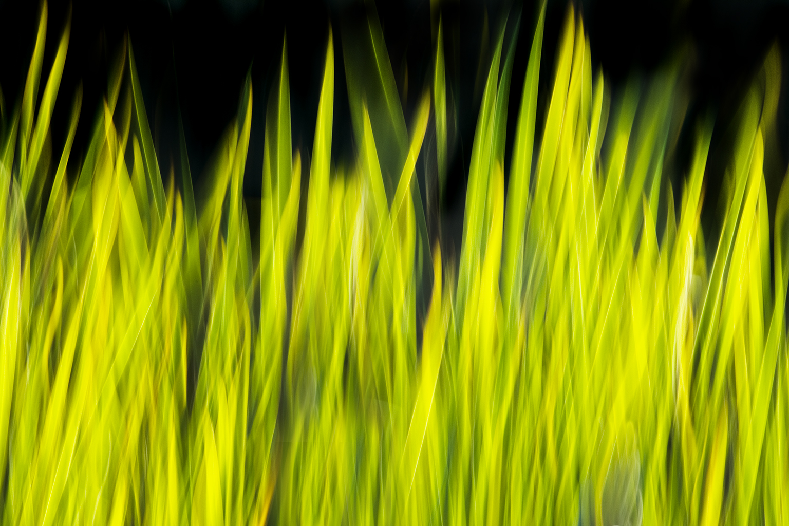 GRASS ESSENCE IV
