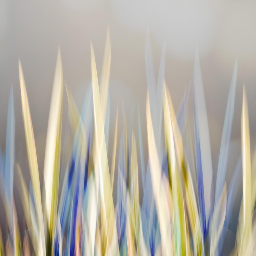 GRASS MODERNE