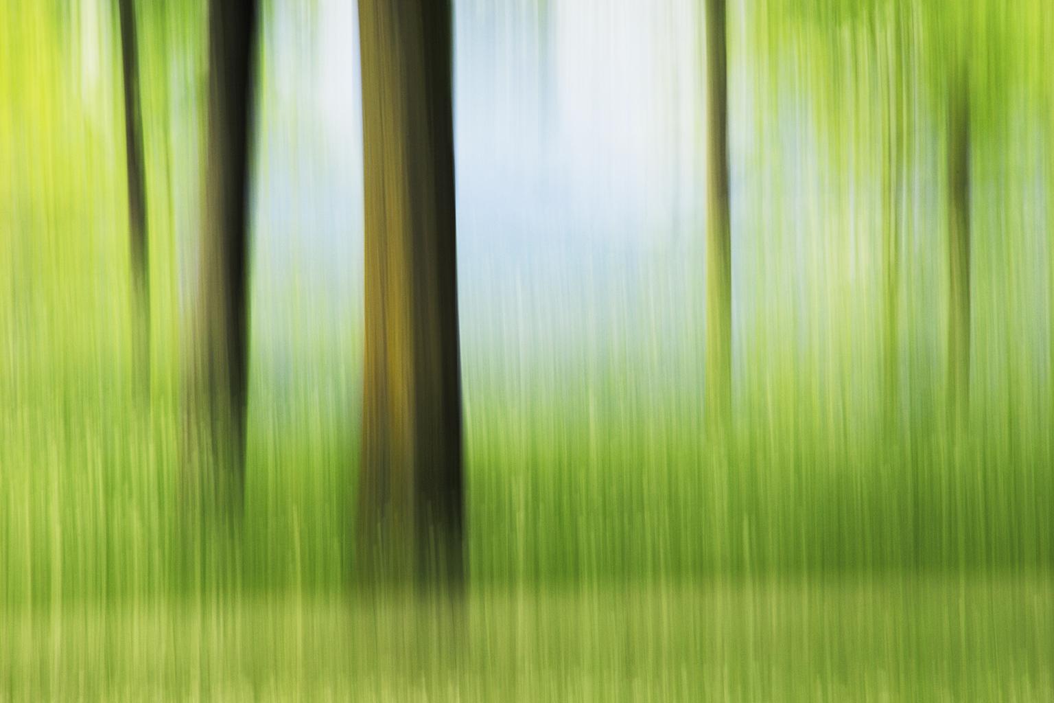 TREE SCENIC