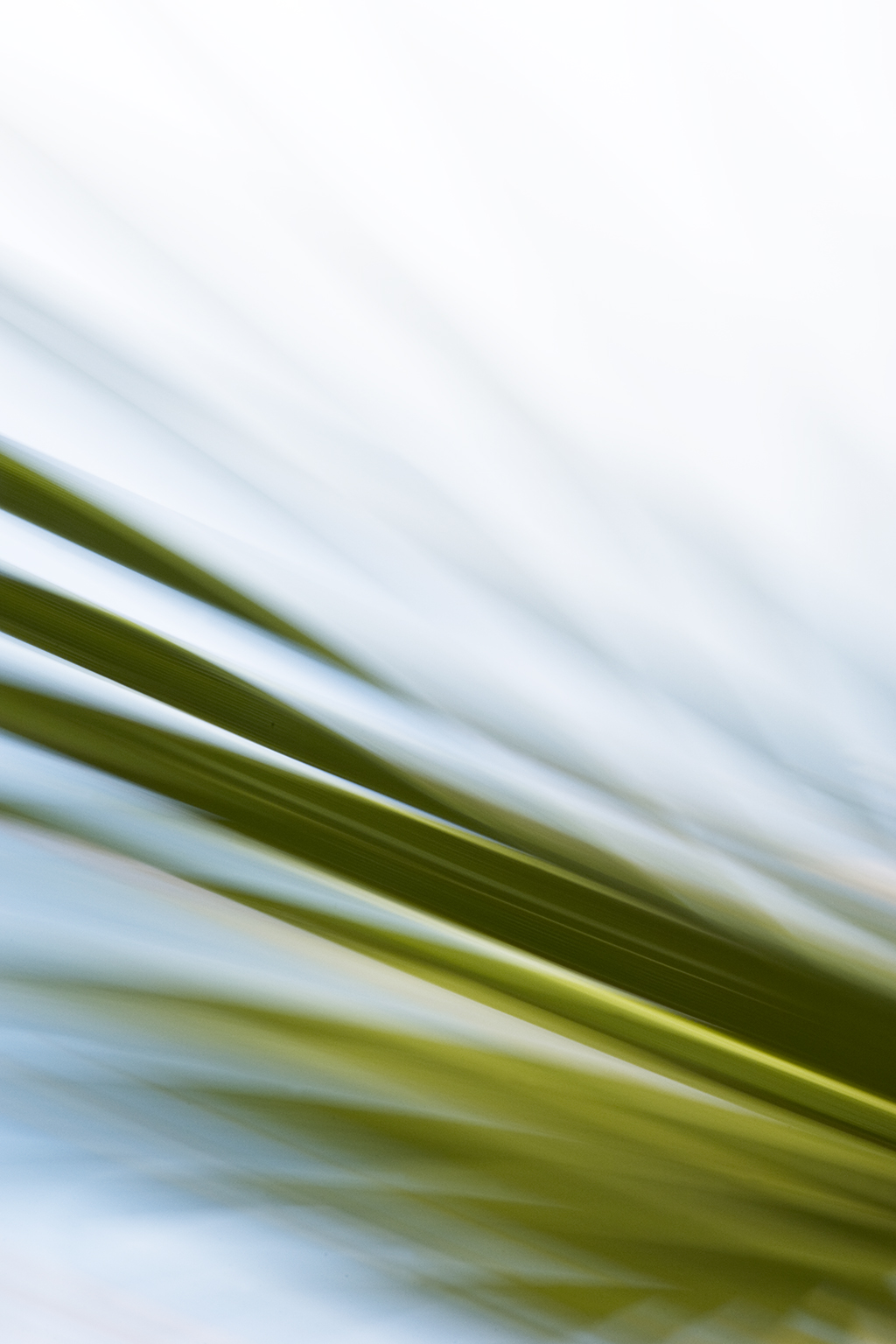 TROPICAL LEAF VII