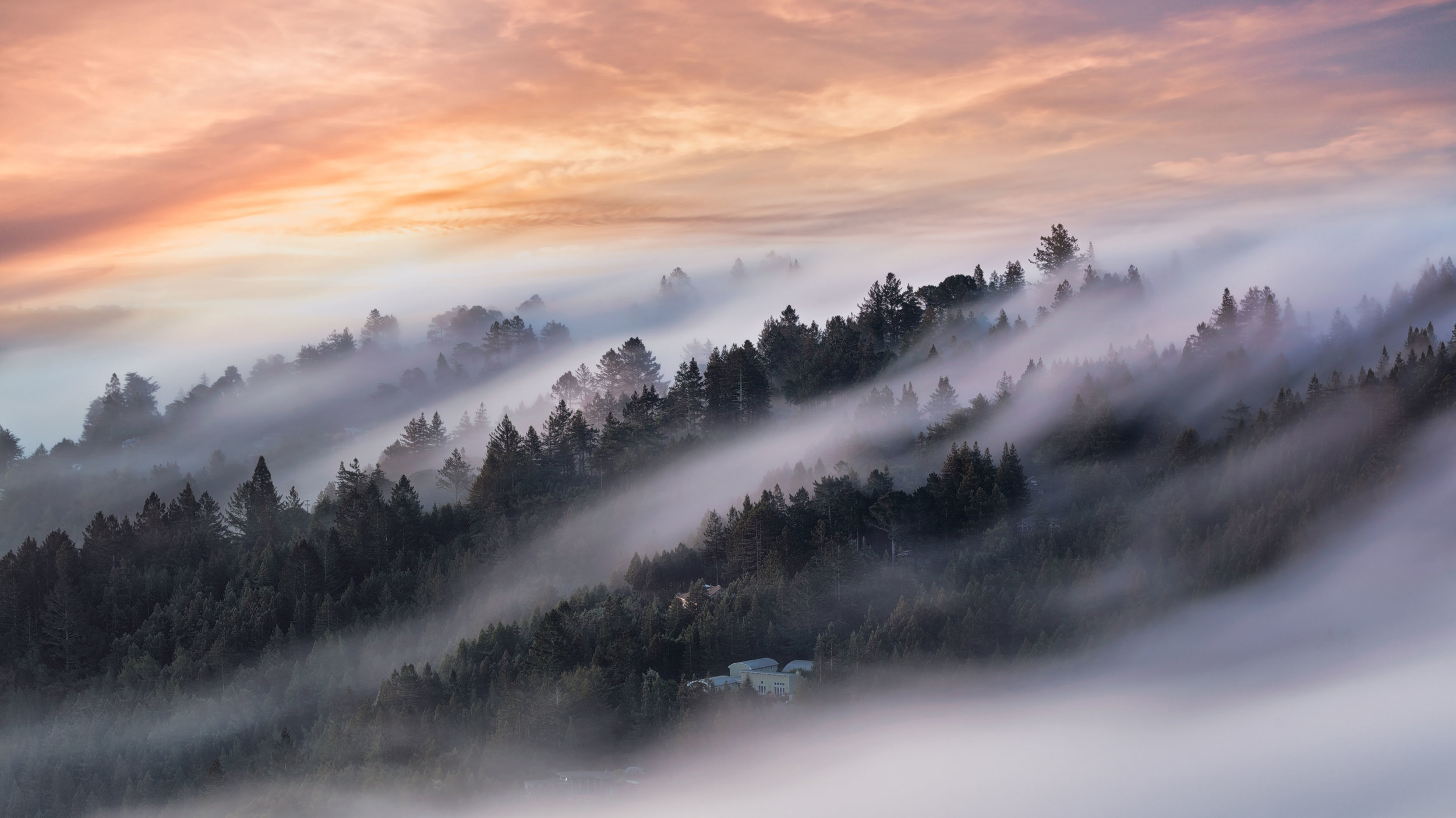 Living in a sea of fog