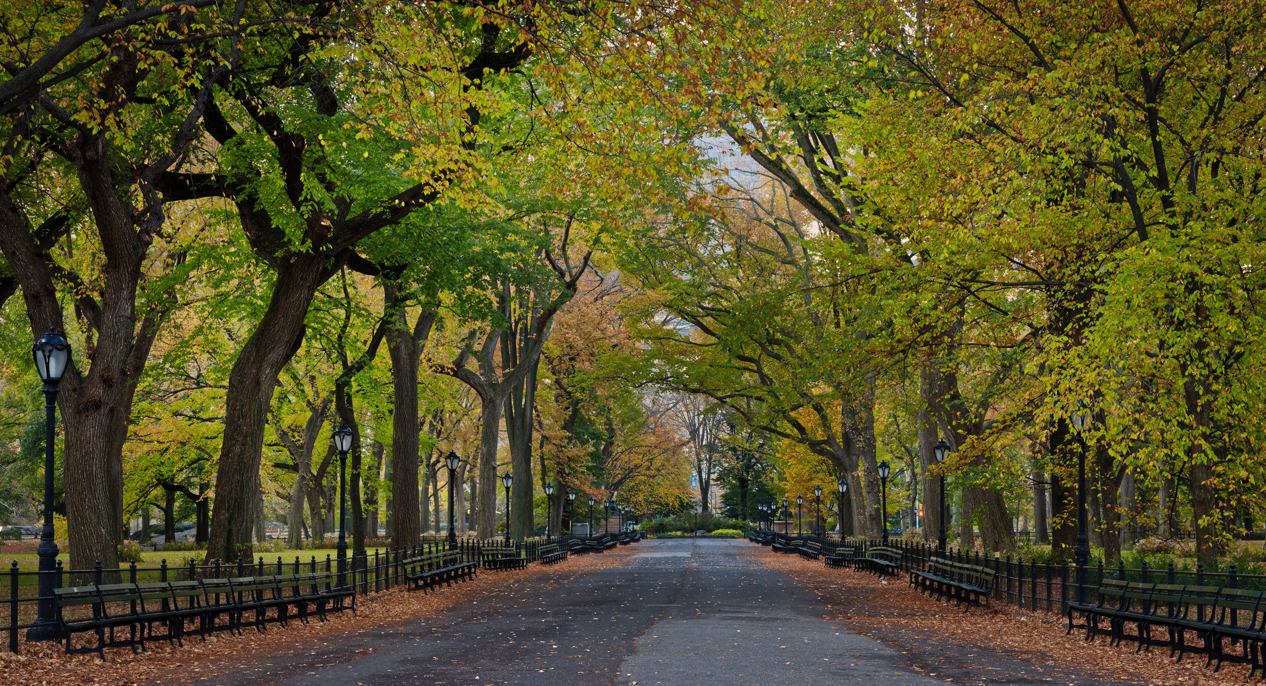 A stroll in the park, New York