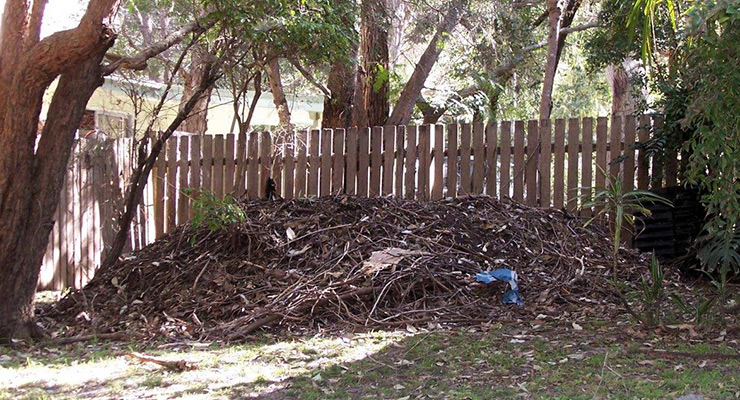 - Even in Sydney, the Brush Turkeys are invading people's backyards. Here is a typical nest up against the back fence. The eggs are layed inside the rotting vegetation which incubates them.One would think that it would have been possible for Aborigines to domesticate them over the millennia and then live off their eggs?