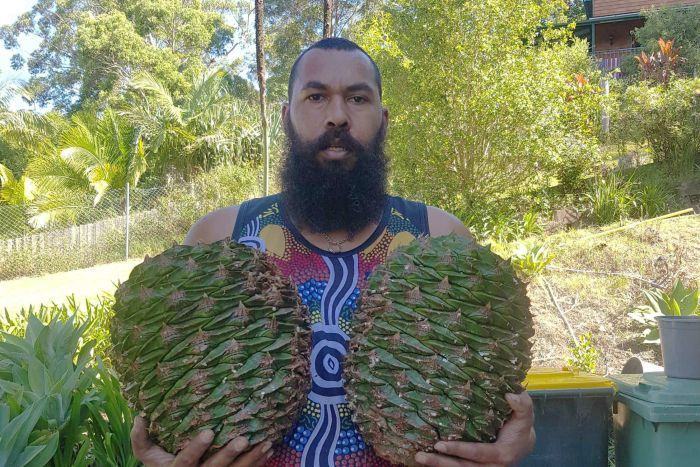 "- But wait, all is not lost yet. Here is Mr Leeton Lee in 2018 at least giving it a go with his small business in harvesting and selling bunya nuts, which according to Mr Pascoe, ""…were so prolific that they provided food for large gatherings of [Aboriginal] people, not only during the harvest, but later when stored quantities could be eaten"" (Dark Emu 2018 reprint, p150).We wish Mr Lee well and will follow his business as it develops, but he needs to get serious and seek Mr Pascoe's marketing skills to achieve some serious funding - see our post below.See : https://www.abc.net.au/news/2018-05-12/australian-native-bunya-nuts-great-camp-food-and-bush-tucker/9751602"