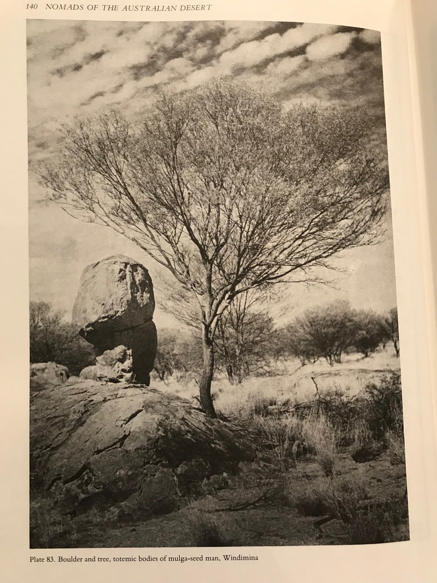 """- """"During the time of creation [there were] four mulga-seed men Windimina, Windulka, Jininpulta and Paralpa…One day while collecting mulga-seed Windimina became ill…[and] collapsed on the ground and died. On the place where he once stood is a single mulga tree, and his body is a pillar of rock. Some time later the other three [Mulga-men]…also died and their bodies were transformed into boulders""""- Mountford, ibid, p139"""
