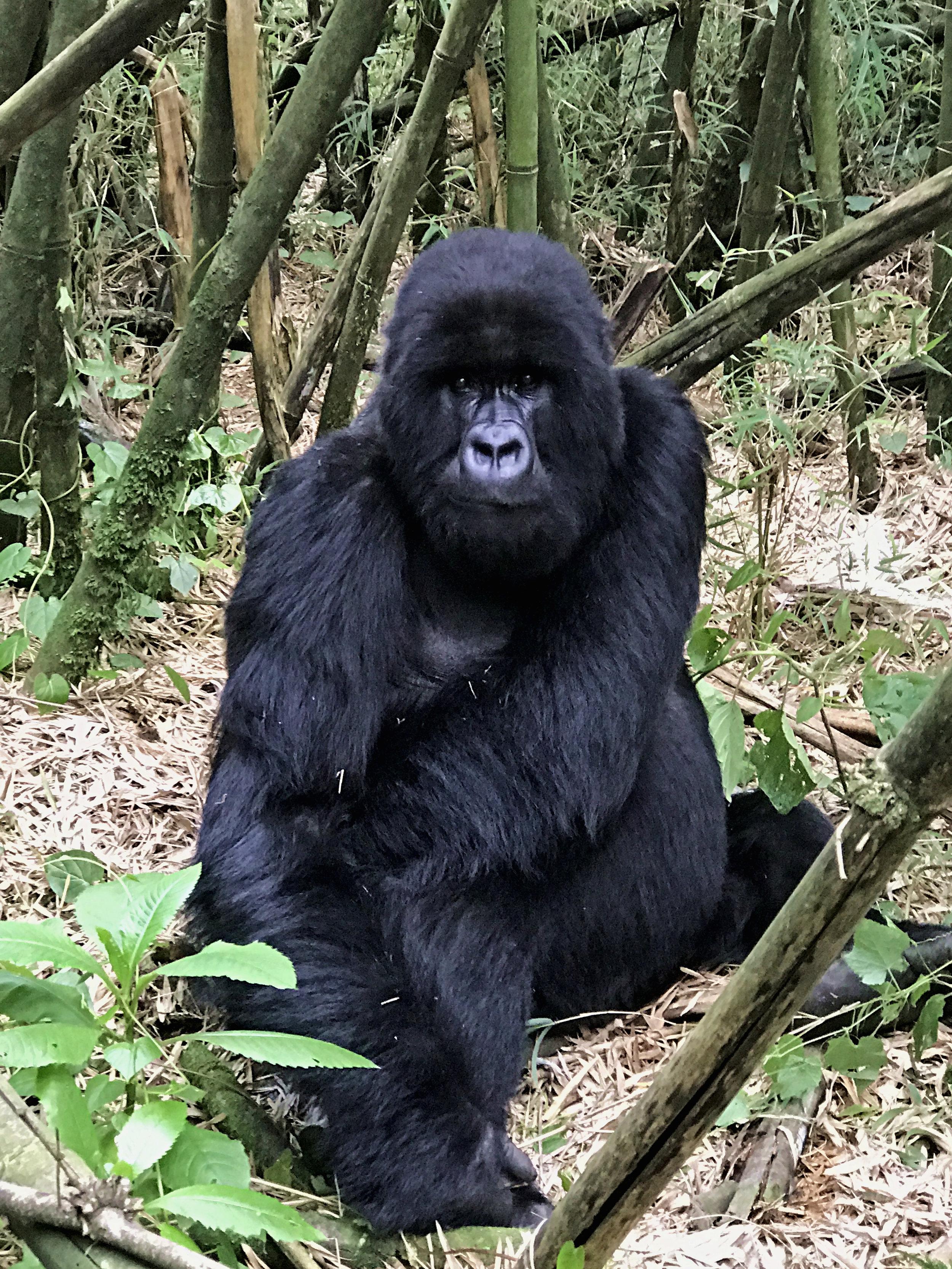 Rwanda & Uganda