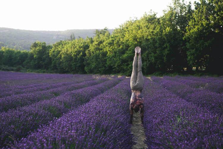 Mark Lavender.jpg