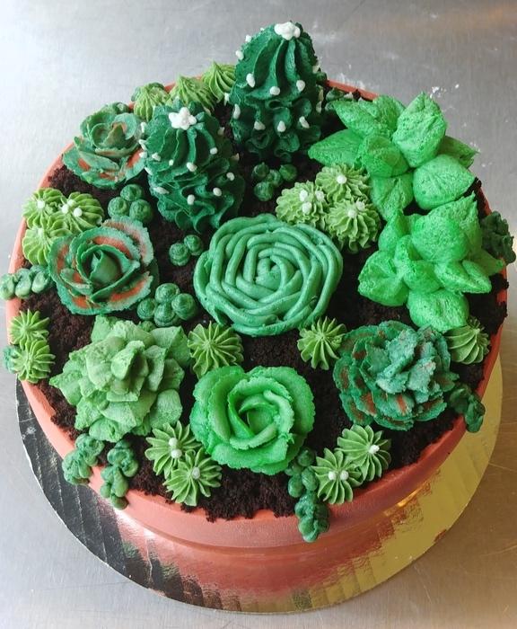 succulent_1_1024.jpg