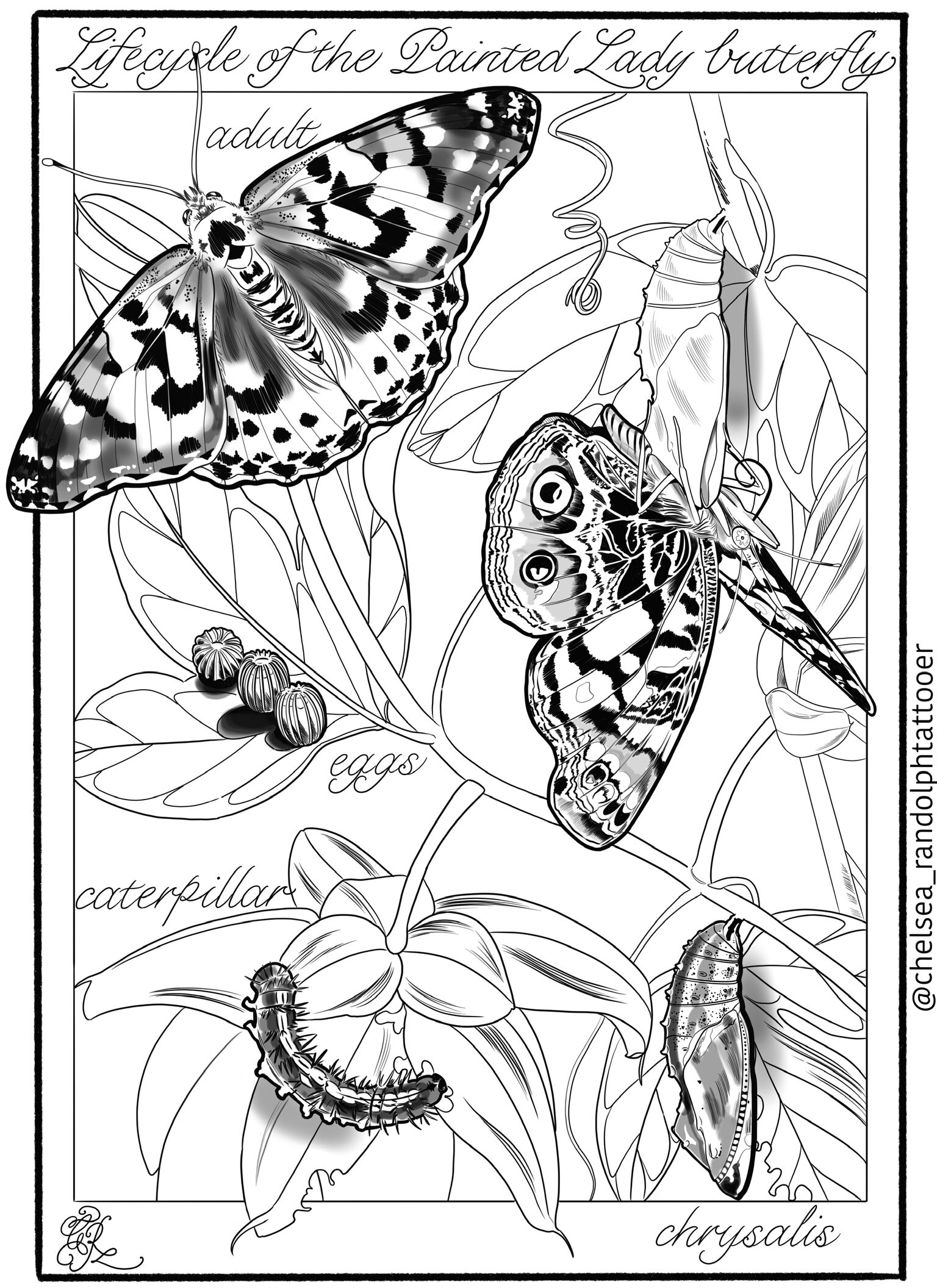 Free Painted Lady Butterfly Coloring Page, Download Free Clip Art ... | 2112x1536