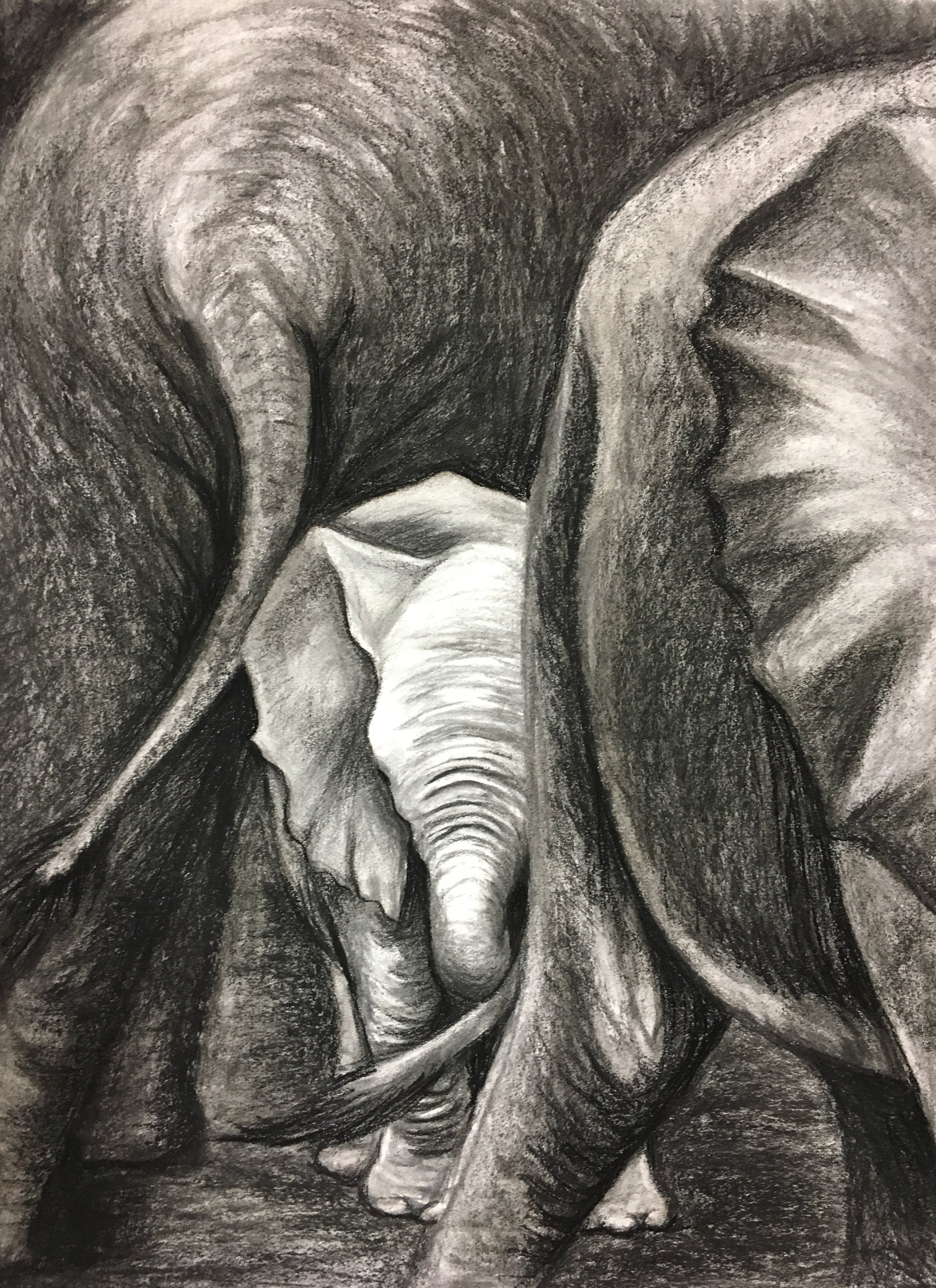 Protected, 2018. Charcoal & chalk on paper. 24x18""